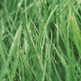 Christine, My question may be unanswerable. I live in a part of the country prone to drought, so grass doesn't always look great, which spoils photos and curb appeal. Do […]