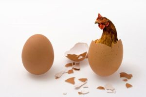 Egg-Chicken-In-Egg-Chicken-Or-Egg.jpg.653x0_q80_crop-smart